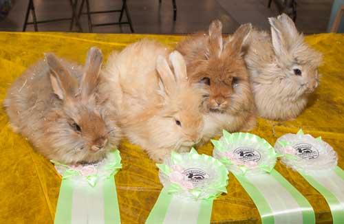 """Немецкие ангорские крольчата на выставке """"Зоошоу"""""""