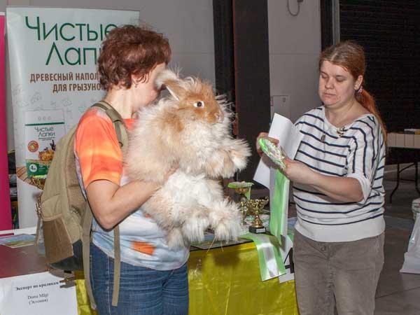"""Кролик Чубайс породы """"немецкая ангора"""" занял 3 место  на выставке"""