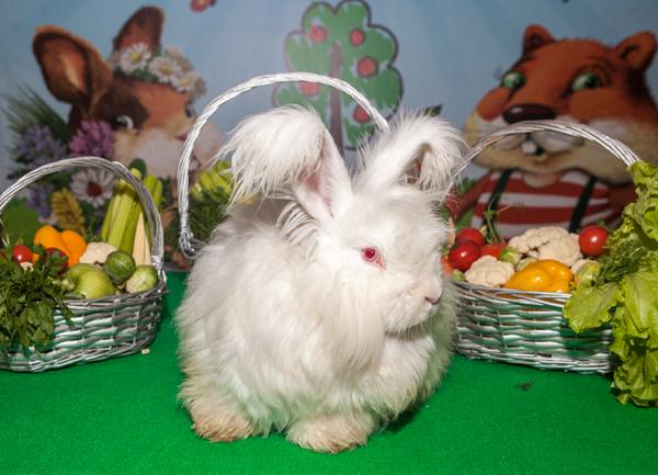 """Ангорские кролики на """"Зоошоу"""" 14-15 декабря 2019 г."""
